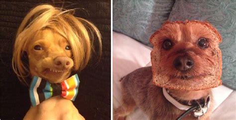 """14 hunder som er drittlei av å ha """"morsomme"""" eiere!"""