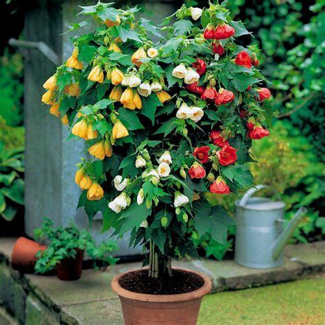 small flowering plants for pots 44 best shrubs for containers best container gardening plants balcony garden web