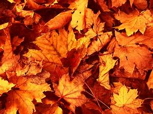 Fall Leaves Wallpaper, Adorable HDQ Backgrounds of Fall ...