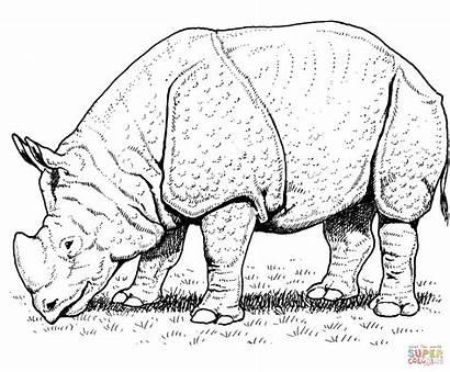 Rhino Coloring Rhinoceros Pages Indian Printable Rhinos