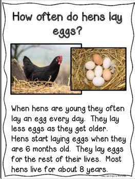 farm animals close reading kindergarten  grade tpt