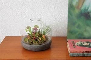 Fleischfressende Pflanze Pflege : terrarium pflanzen pflege tipps sommer sonne liebenden ~ A.2002-acura-tl-radio.info Haus und Dekorationen