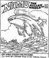 Whale Coloring Orca Killer Drawing Worksheet Whaleshark Searches Recent sketch template