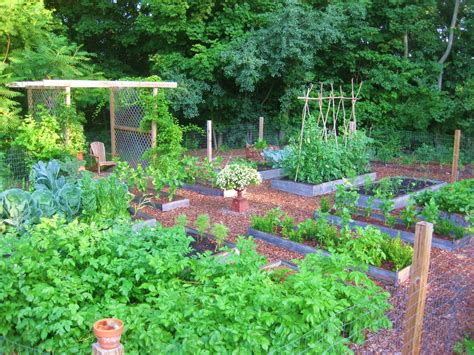 cheap wire fencing creating a raised bed garden