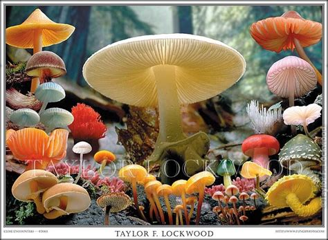 dasar dasar perlindungan tanaman jamur  cendawan opt golongan patogen penyebab penyakit
