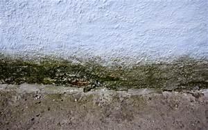 Putz Gegen Schimmel : schimmelsanierung h j epple gmbh ~ Lizthompson.info Haus und Dekorationen
