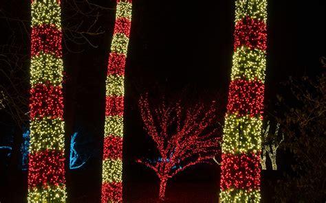 how to wrap christmas lights gallery tree wrap focal tree lighting nashville