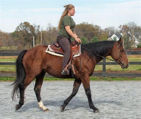 quarter horse appendix horses chestnut stallion breed buckskin smfhorses