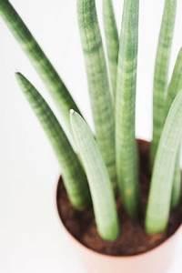 Pflanzen Die Wenig Wasser Brauchen : beliebte exotische pflanzen und zimmerpflanzen ~ Frokenaadalensverden.com Haus und Dekorationen