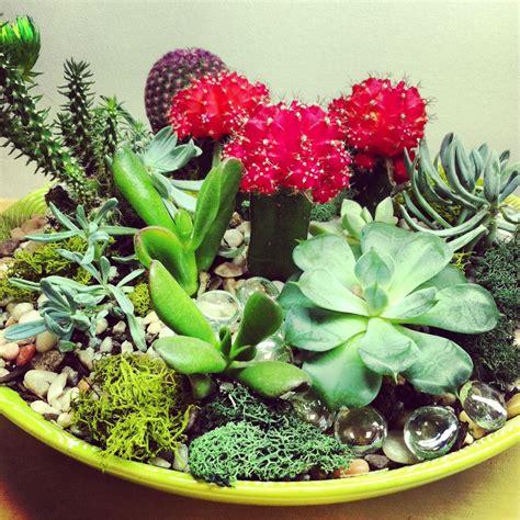 cactus dish garden succulent and cacti dish garden in house garden design