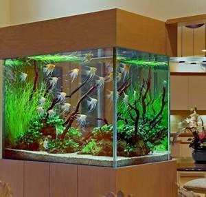 Aquarium Dekorieren Ideen : das heimische aquarium aufpeppen variationen und ideen ~ Bigdaddyawards.com Haus und Dekorationen