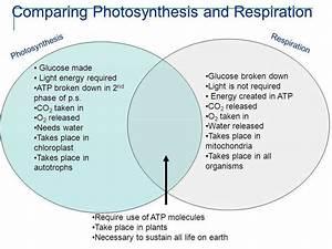 33 Venn Diagram Of Photosynthesis And Cellular Respiration