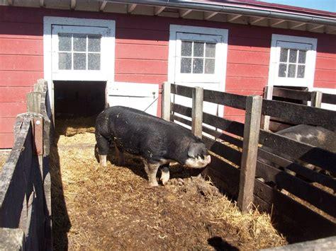 Hog Barn Plans by Farming Like It S 1889 Ranch Board Pig Farming Barn