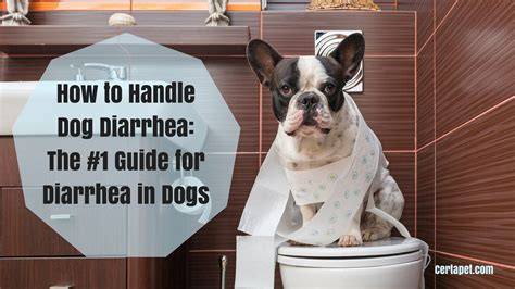How To Handle Dog Diarrhea The 1 Guide For Diarrhea In