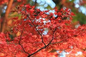 Japanischer Ahorn Dngen Wann Wie Oft Und Womit