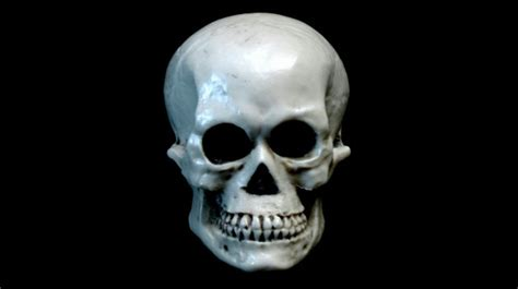 skull  black background  stock photo public domain