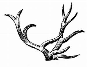 Deer-Antlers-VintageGraphicsFairy - The Graphics Fairy