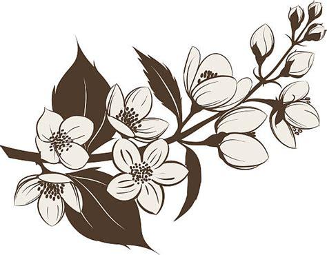 Jasmine Flower Clip Art, Vector Images & Illustrations