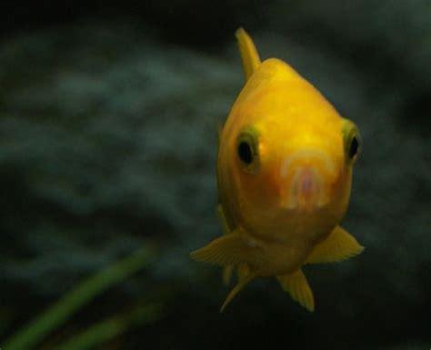 le plus beau poisson de votre aquarium page 6