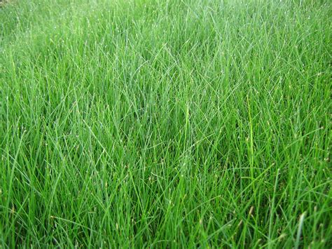 The Best 3 Grass Types For Your Denver, Co Lawn