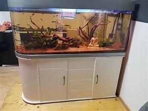 Aquarium Als Raumteiler : aquarium 450 liter als raumteiler blickfang in pforzheim ~ Michelbontemps.com Haus und Dekorationen