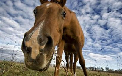 Horse Wallpapers Funny Face Wallpapertag