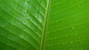 Green leaves nature water drops wallpaper wallpapers and ...