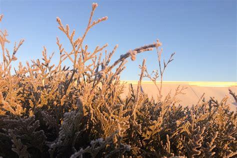 Der Garten Im Dezember by Wintertipps Der Garten Im Dezember Und Januar