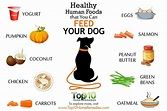 10 Healthy Human Foods that You Can Feed Your Dog | Top 10 ...