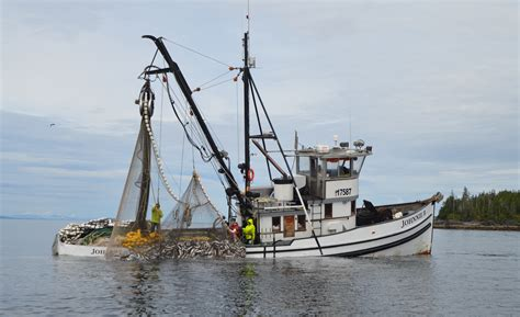 Alaska Commercial Fishing Boat by Photo Commercial Salmon Fishing In Alaska Susan Shain