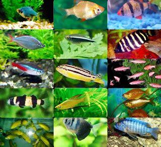 irel aquarium jenis jenis ikan hias