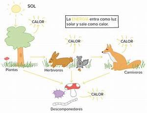 global warming effects on animals essay