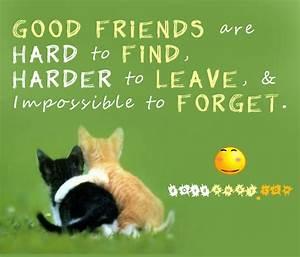 Best friend Quotes. QuotesGram