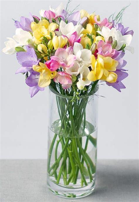 fresien meine lieblingsblumen mit bildern blumen