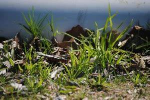 Rasenpflege Nach Dem Winter : rasenpflege im fr hjahr so geht 39 s garten mix ~ Orissabook.com Haus und Dekorationen