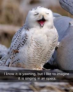Best 25+ Funny owls ideas on Pinterest | Funny owl ...