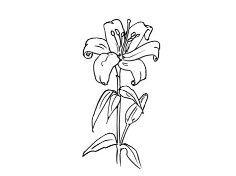bouquet  flowers  nature printable coloring pages