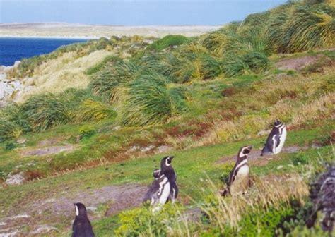 Información de las Malvinas: Historia y geografía de las