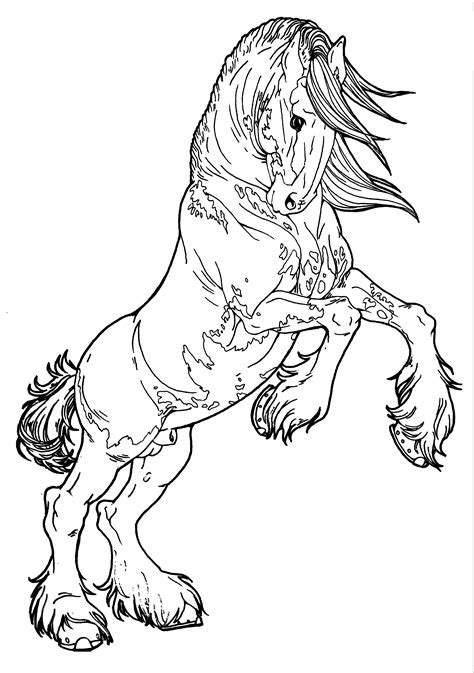 horse rearing drawing getdrawings