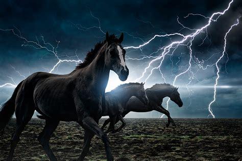 love horses day plotaverse