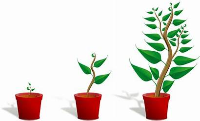 Growth Plant Clip Growing Grow Clipart Clker