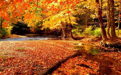 beautiful fall colors autumn autumn beautiful beauty colors fall forest grass leaves lovely nature peaceful