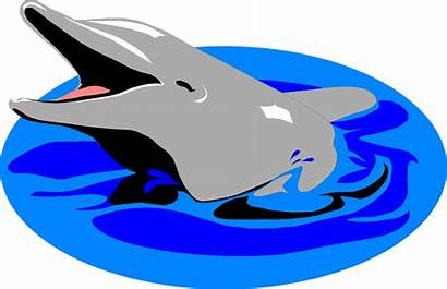 Dolphin Clipart Water Illustration Transparent Dolphins Clip
