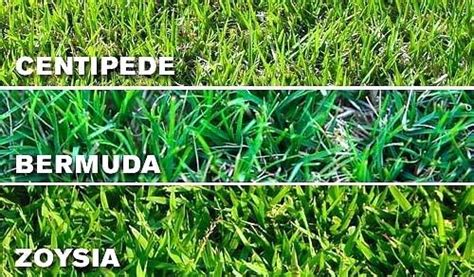 The Top 6 Types Of Grass For Your Lawn