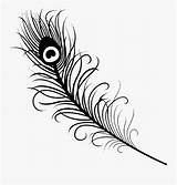 Feather Peacock Simple Coloring Drawing Successful Clipart Clipartkey sketch template