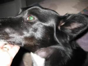 Dog Health: Spider Bite Treatment