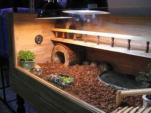 Russian tortoise cage - I love this one! | B | Pinterest