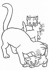 Coloring Pages Kittens Kitten Printable Cat sketch template