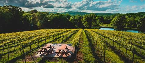 hill chandler wineries vineyards path beaten