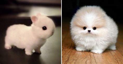 cute animals     heart explode